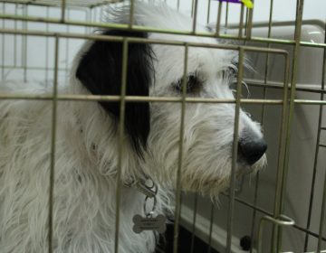 Sacrifican mil perros al mes en el antirrábico de Aguascalientes