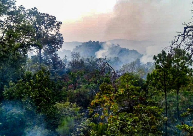 Evacúan a 200 familias en Ayautla, Oaxaca por incendio forestal