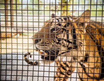 Reintegra 300 ejemplares de fauna silvestre a su hábitat en Aguascalientes