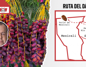 Ruta del dátil es viable en el Valle de Mexicali, pero requiere de infraestructura