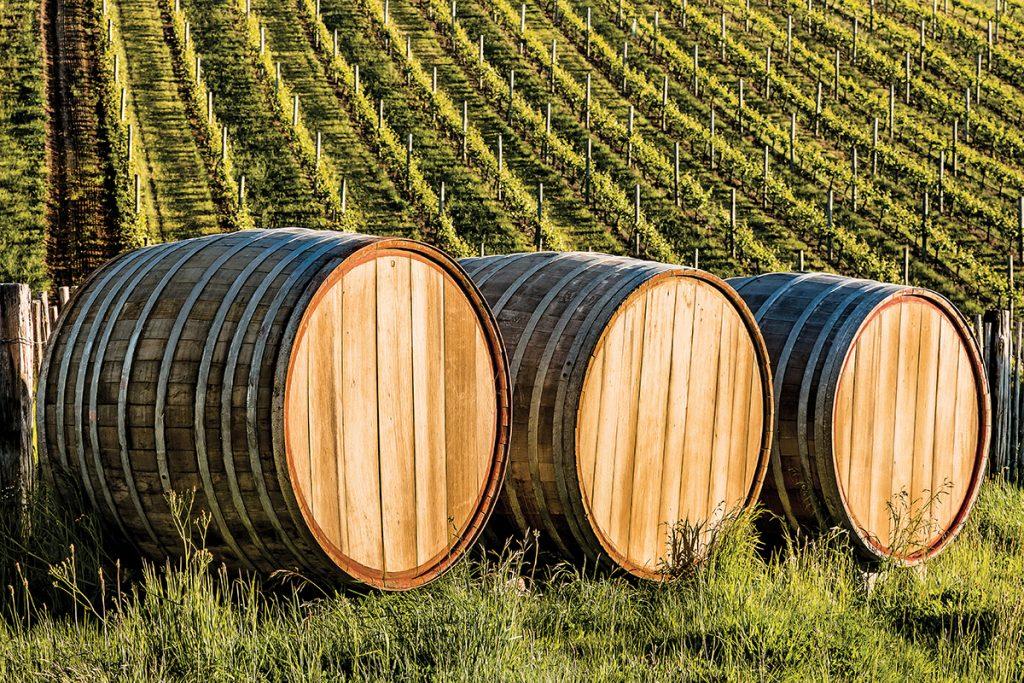 Vista de unos barriles y viñedos de Nueva Zelanda