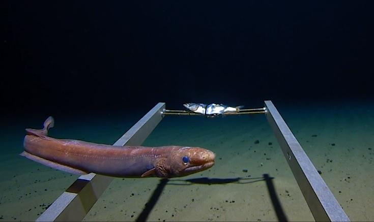 Los investigadores hacen un chocante hallazgo en la fosa de las Marianas