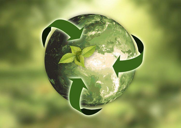 Opinión | Ecología en fragmentos: todo está relacionado