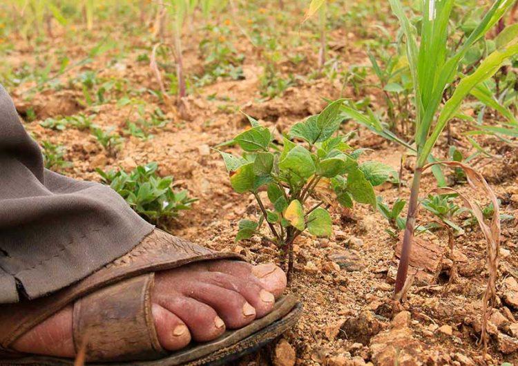 Sequías ponen a la Sierra Norte de Puebla cerca del colapso