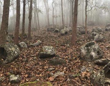 """Arqueólogos descubren milenarias """"vasijas de la muerte"""" en un bosque asiático"""