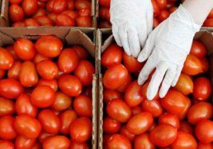 Pequeños productores, los más afectados por arancel al tomate: especialista