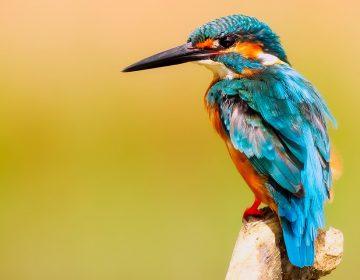 Guanajuato llegó al top 10 del conteo de aves Global Big Day