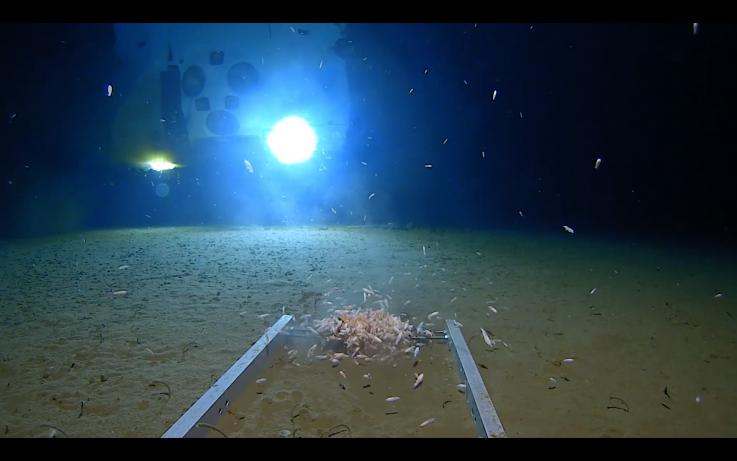 Hallan restos de plástico en lo más profundo del océano