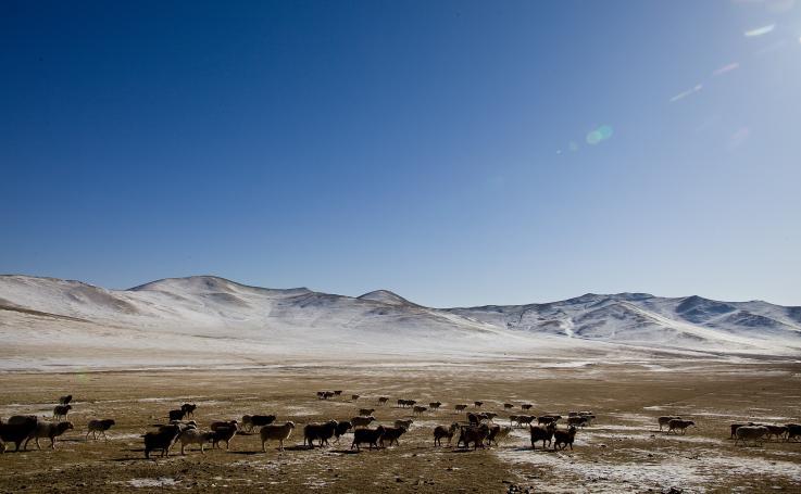 Turistas aterrorizados son puestos en cuarentena por brote de peste en Mongolia