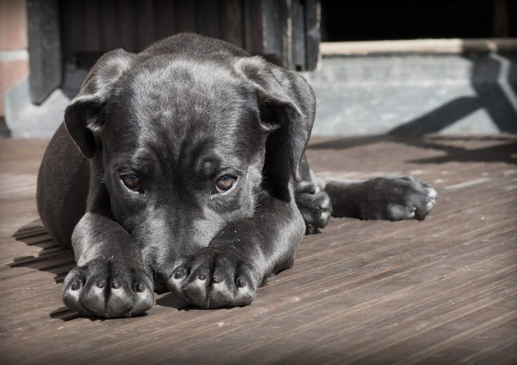 Gobierno británico impulsa ley para acabar con granjas de perros y gatos