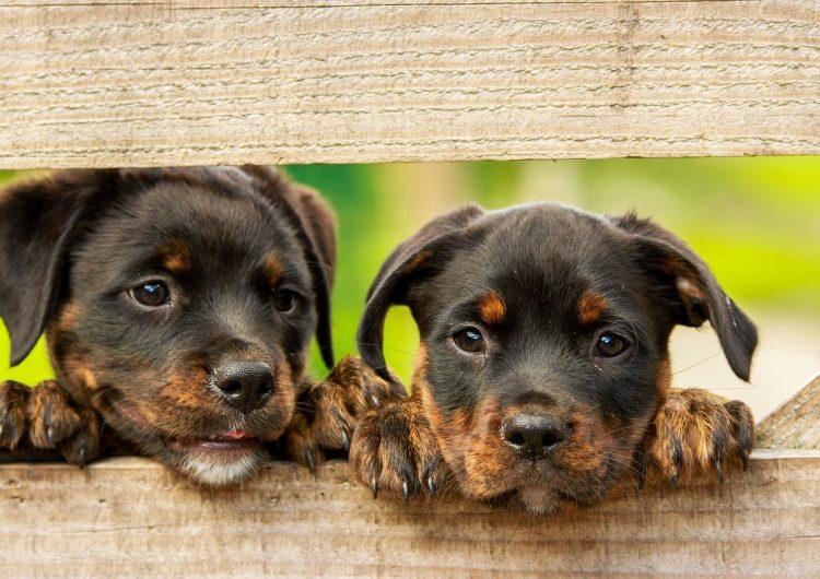 Walmart abrirá 100 veterinarias en sus tiendas para aprovechar el amor de los millennials a sus mascotas