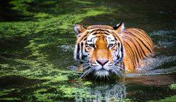Campaña contra cazadores furtivos da resultados: por primera vez en…