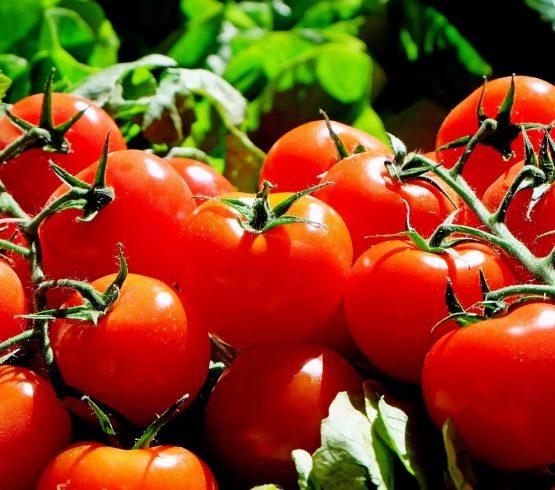 EU cobrará impuesto a productores mexicanos por exportar tomate