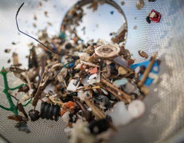Los microplásticos llegan a tu mesa y cada semana consumes alrededor 5 gramos