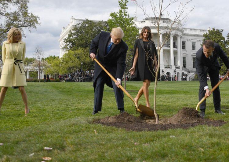 Murió el árbol que plantaron Trump y Macron en la Casa Blanca como señal de amistad