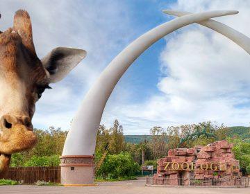 Irregularidades en Zoológico de León causan daño al erario por 6 mdp