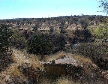 Decretan 176 hectáreas del Bosque de Cobos como área natural protegida