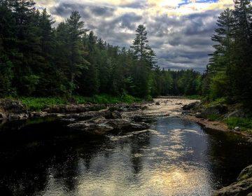 A 50 años de su último uso, insecticida tóxico sigue en lagos canadienses