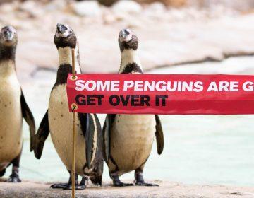 Exhiben a pingüinos gay en Zoológico de Londres como muestra de la diversidad sexual