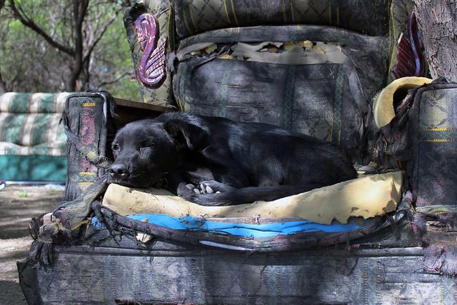 ¿Aún hay maltrato animal en Aguascalientes?