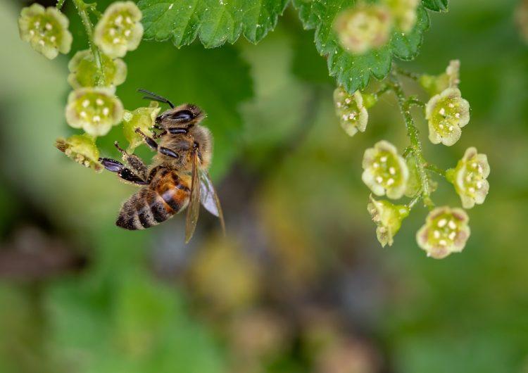 Científicos les enseñaron a unas abejas cómo usar un lenguaje numérico… y ellas lo entendieron