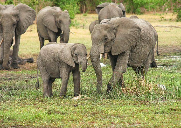 La caza ilegal ha matado a cerca de 400 elefantes en 2 años al sur de África
