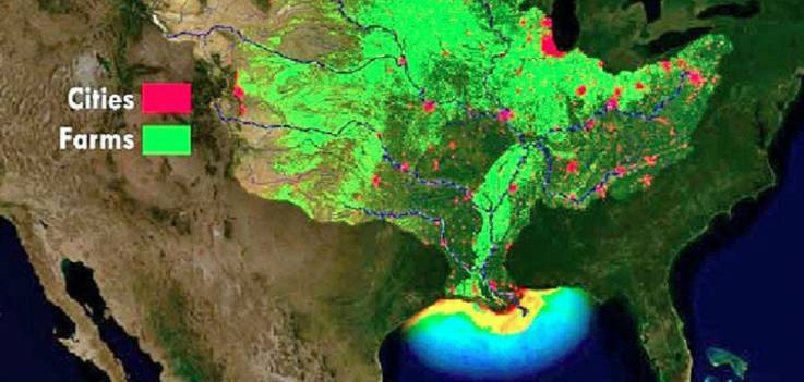 """Qué es la """"zona muerta"""" en el Golfo de México que científicos dicen amenaza a las especies"""