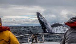 "El cambio climático está ""asfixiando"" al océano Atlántico, cada vez…"