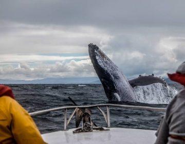 """El cambio climático está """"asfixiando"""" al océano Atlántico, cada vez tiene menos oxígeno"""