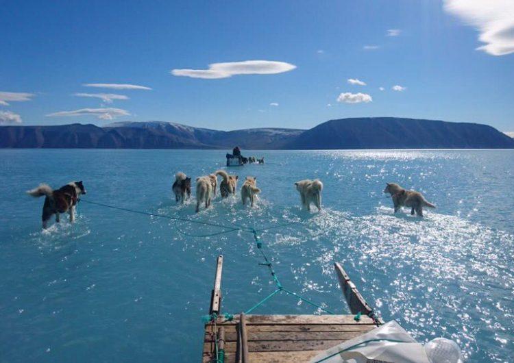 ¿Y el hielo? La foto de unos perros jalando un trineo en el agua alerta sobre el calentamiento global