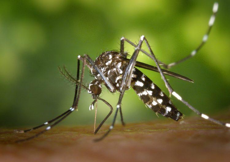 Se dispara el número de casos de dengue en Guanajuato