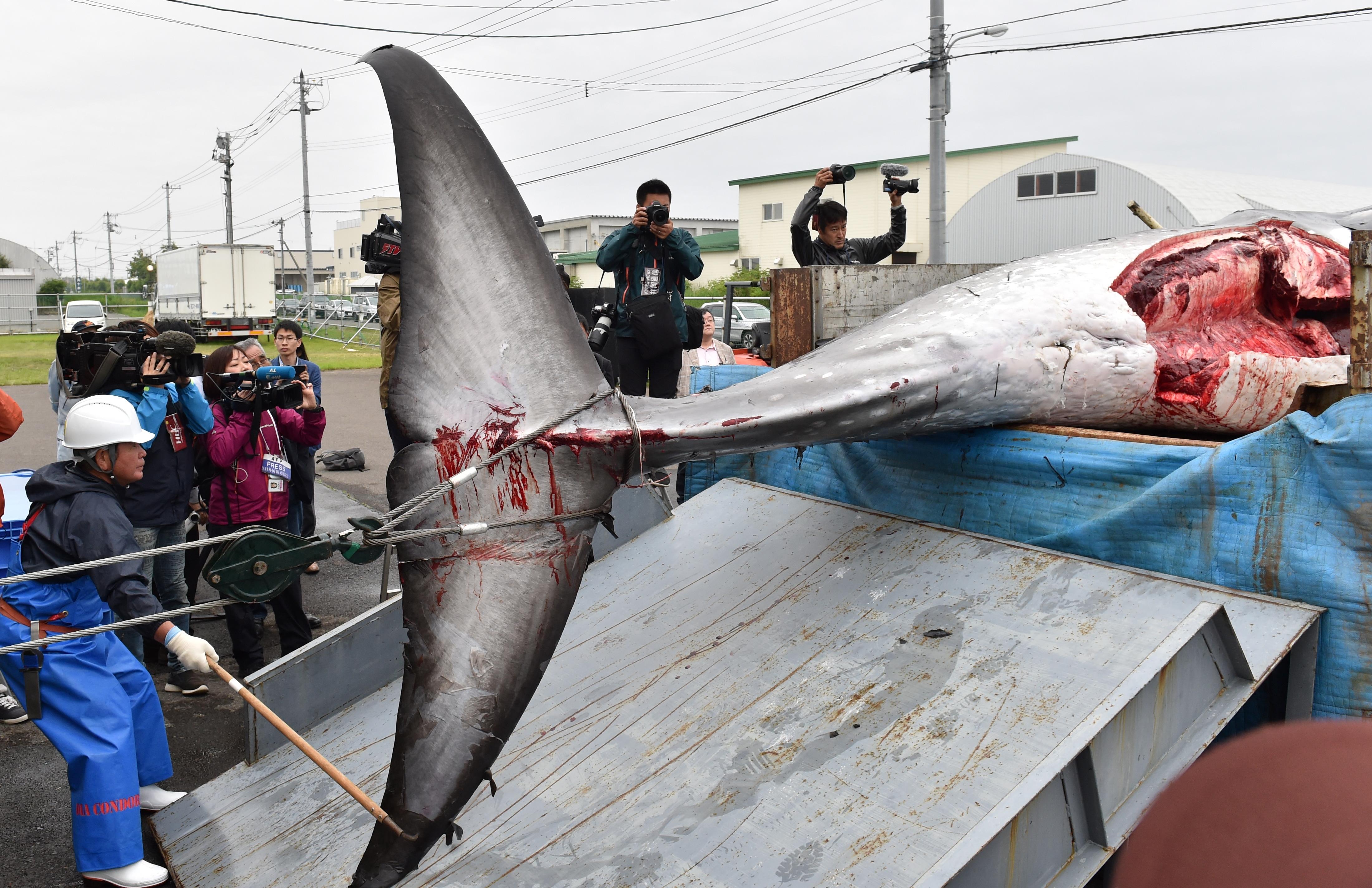 De acuerdo con pescadores, la caza de ballenas es una práctica con más de 400 años en Japón. Foto: AFP