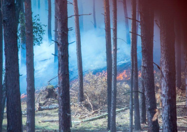 Altas temperaturas ocasionan incendios, humo, glaciares derretidos y decenas de muertos