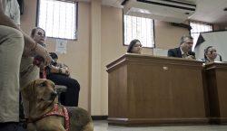 Campeón, el primer perro en América Latina que asiste a…