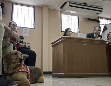 Campeón, el primer perro en América Latina que asiste a un juicio como víctima de maltrato