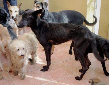 Acumuladores de mascotas: Sólo se ha resuelto un caso en todo México