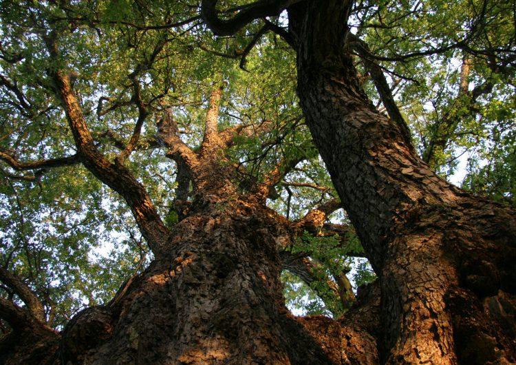 Empiezan reforestación estatal y mejoras en Río verde