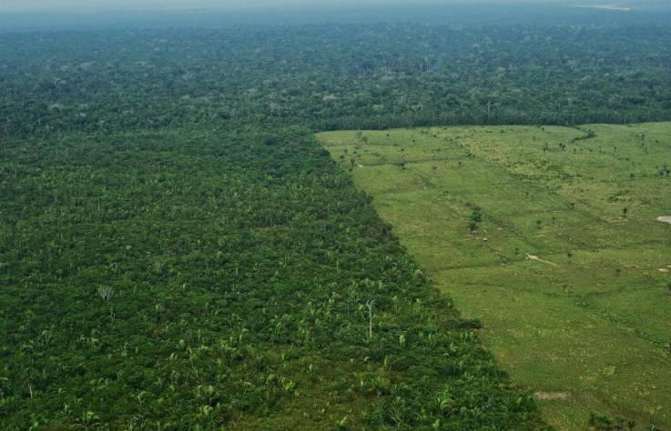 Se pierden tres campos de fútbol de árboles cada minuto por la deforestación en la Amazonia