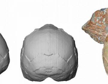 Investigadores descubren cráneo que indica que humanos vivieron en Europa hace 210,000 años