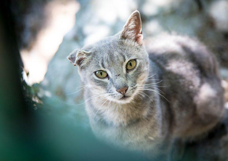 Una mujer de 79 años pisará la cárcel por alimentar gatos callejeros