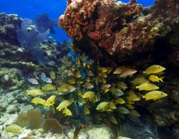 Aguas residuales y fertilizantes amenazan a los arrecifes de coral
