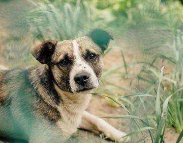 Ramos Arizpe prospecta albergue para perros callejeros