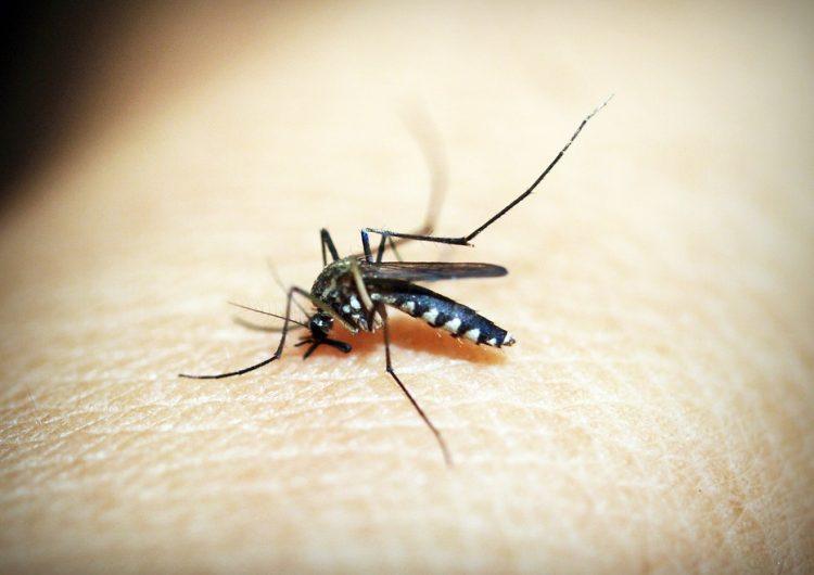 El 65% de la población en colonias afectadas no se suma prevenir el dengue