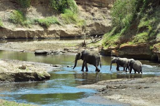 Kenia-elefantes-conservacion