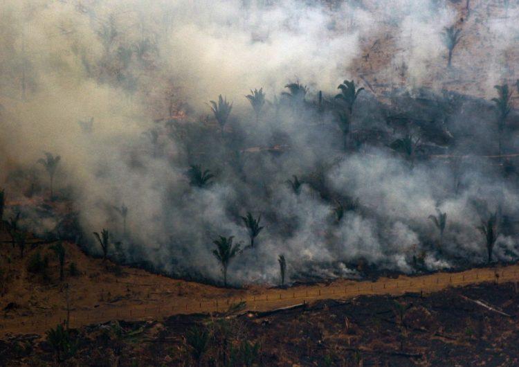 DiCaprio y Louis Vuitton donan 16 millones de dólares para conservar la Amazonia