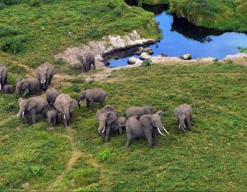 La venta de elefantes de África a los zoológicos queda prácticamente prohibida