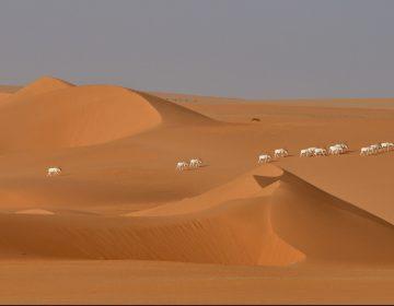 La mayor reserva natural de África, amenazada por una petrolera china
