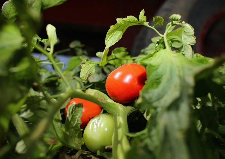 Tomateros de México y el gobierno de EU alcanzan primer acuerdo por arancel