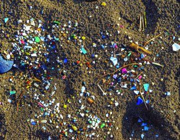 Microplásticos: del mar a tu sangre y estómago