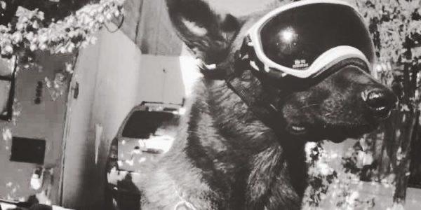 Chichí, perro rescatista del 19S, fallece en Coahuila